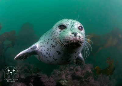 Harbor Seal of endless joy