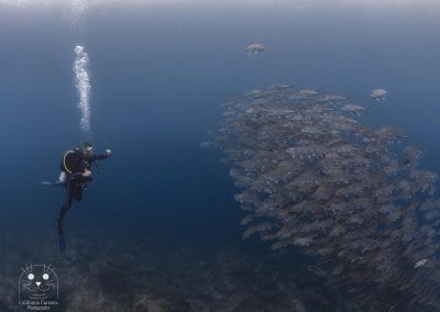 Raja Ampat fish friends