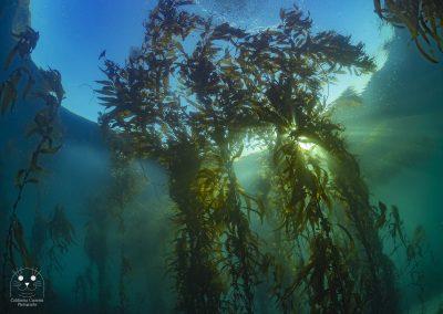Monterey Kelp Forest